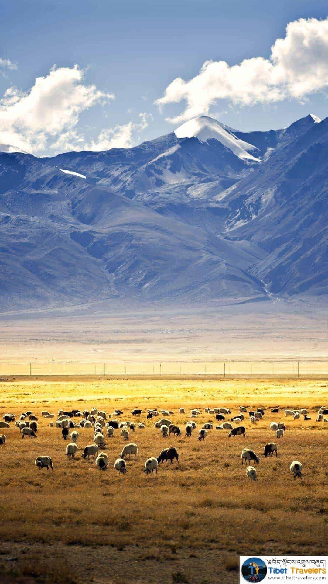 How To Travel Tibet?